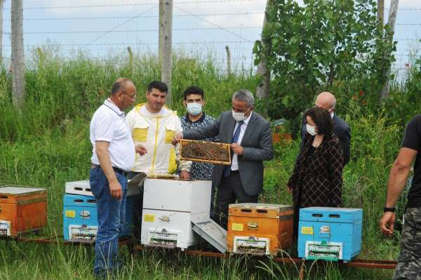 Ana Arı Üretim İşletmesinde üretilen ilk ana arıların dağıtımı başladı