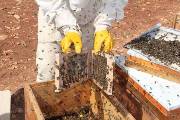 Gramı 500 TL olan arı zehri Adıyamanda üretilmeye başlandı