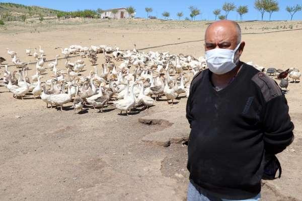 Polisliği bıraktı, köyünde kaz çiftliği kurdu
