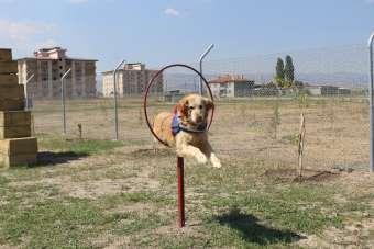 Bu köpekler, kaçakçıların ve teröristlerin korkulu rüyası
