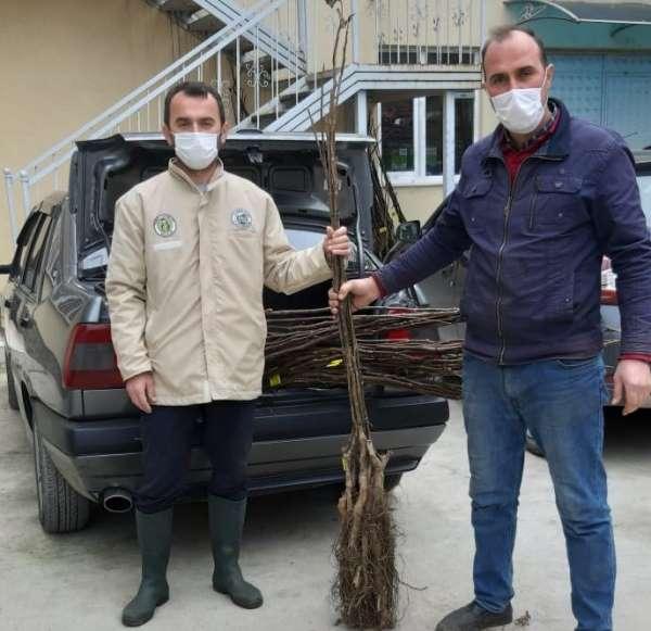 Büyükşehir'den 2 bin ceviz fidanı desteği