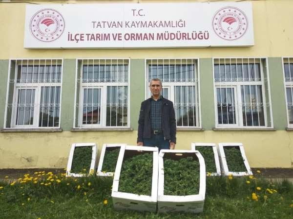 Tatvan'da bin adet domates fidelerinin dikimine başlandı