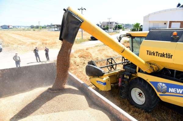 20 ton ürün, bulgur halinde ilçe sakinlerine dağıtacak, belediye aşevinde kullanacak.