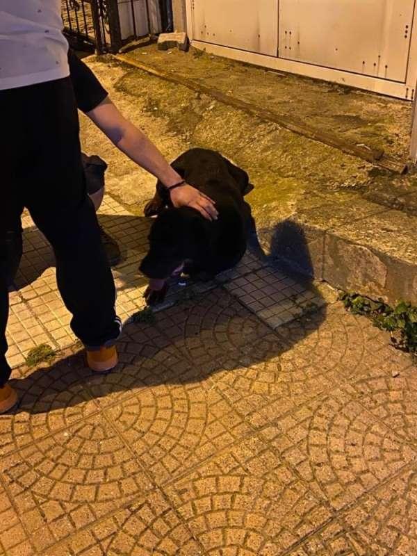 Köpeklerin kavgası sahiplerine zor anlar yaşattı