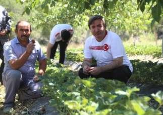 Aksaray Valisi Aydoğdu: 'Aksaray'da çilek üretimini arttıracağız'