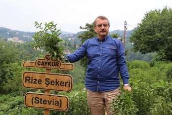 ÇAYKUR Eski Genel Müdürü İmdat Sütlüoğlu iddialara cevap verdi