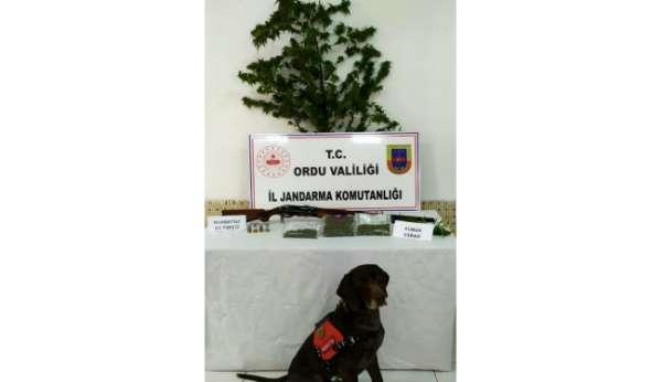 Orduda uyuşturucu operasyonu: 2 gözaltı