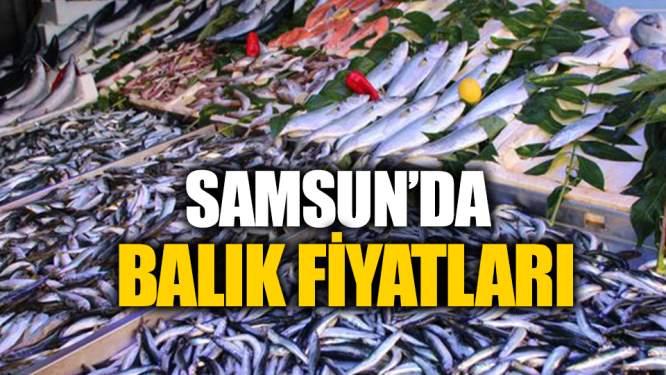 Samsun Haberleri: Samsun'da Balık Fiyatları!