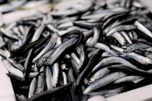Giresunlu balıkçılardan 'Av yasağı Eylül'de değil Ekim'de kalksın' önerisi