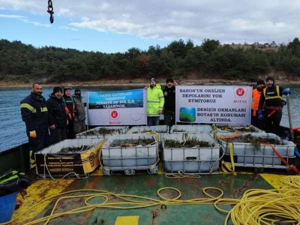 BOTAŞ'tan Saros Körfezi'nde gerçekleştirdiği proje alanına 100 bin ağaç