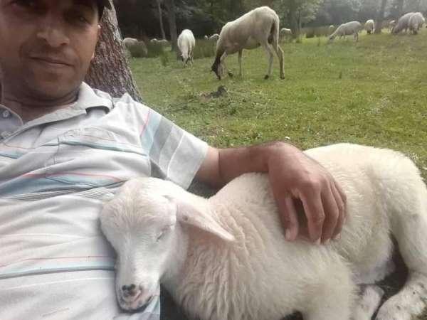 Çobanla kuzunun dostluğu: Sahibinin kucağında uyuyor