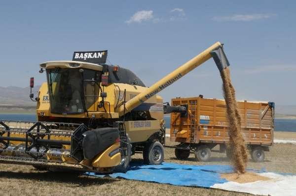 Bitliste 100 milyon TLlik buğday hasılatı bekleniyor