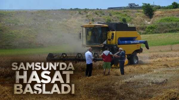 Samsun'da hasat başladı