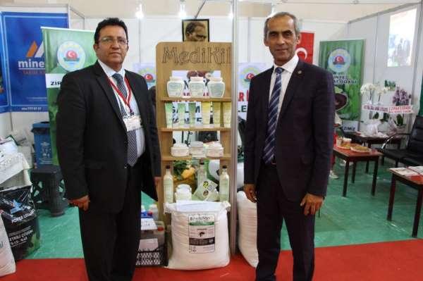 Fındıkta aflatoksin ve küllemeye doğal çözüm: 'Bentonit'