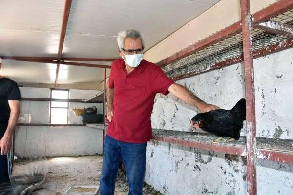 Bodrumlu çiftçilere tavuk dağıtımı
