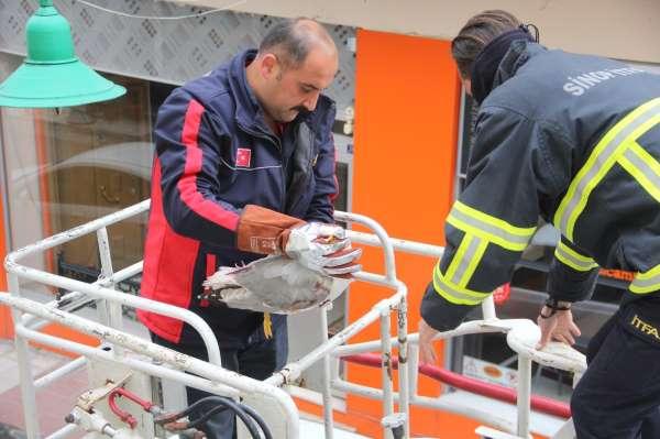Sinopta mahsur kalan martıyı itfaiye kurtardı