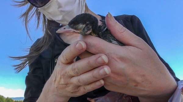Yuvasından düşen kuşu itfaiye kurtardı
