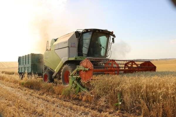 Diyarbakırlı çiftçi hasattan memnun
