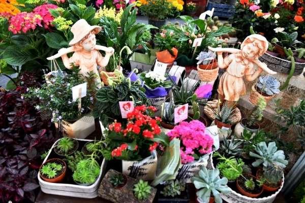 Manisa'da 2. Çiçek Festivali 1 Temmuz'da başlıyor