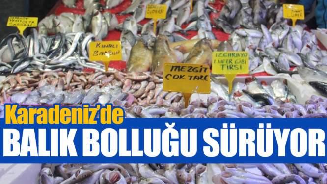 Samsun Haberleri: Karadeniz'de Balık Bolluğu Sürüyor