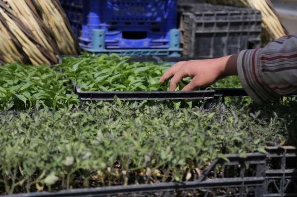 Tam kapanmada üretime devam eden çiftçilere fide desteği