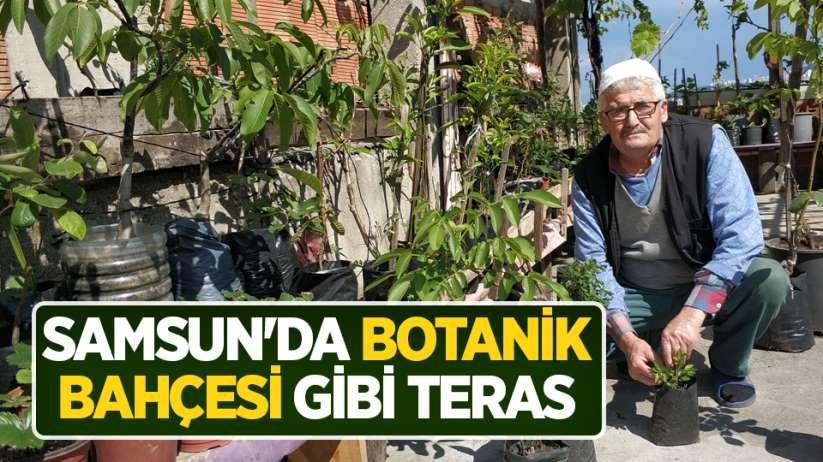 Samsun'da botanik bahçesi gibi teras