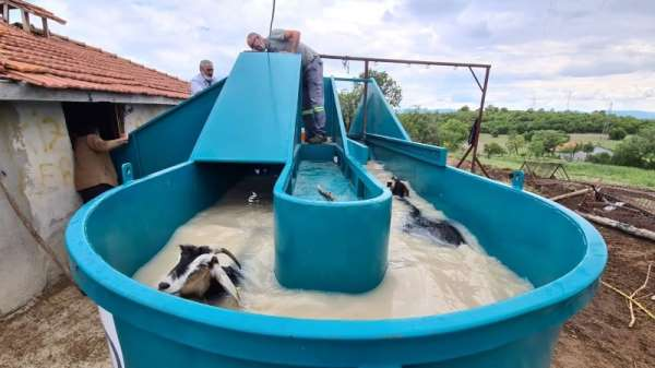 Keçi peyniri projesi için alınan küçükbaş hayvan yıkama ve ilaçlama makineleri hizmete girdi