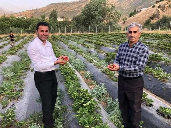 Derecik ilçesinde sebze yetiştiriciliği