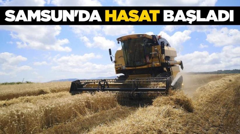 Samsunda hasat başladı