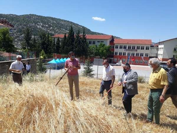 Akseki MYOda buğday hasatı yapıldı