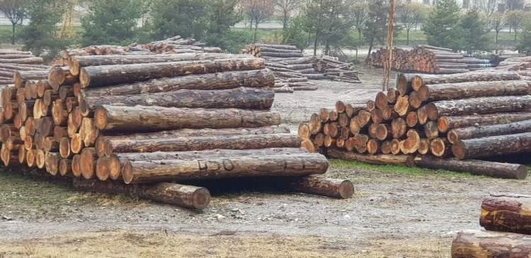 Ormancılar Kaçak Tomruklarla Yakalandı