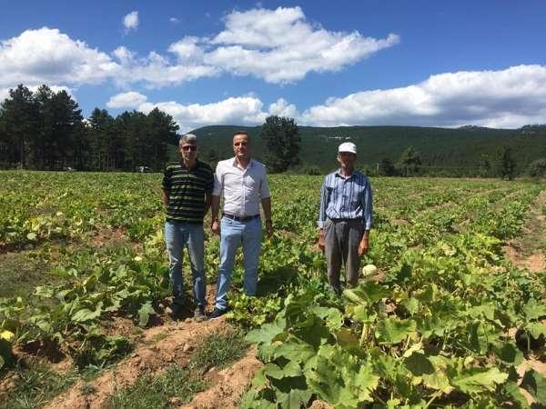 Simav'da çerezlik kabak hasadı
