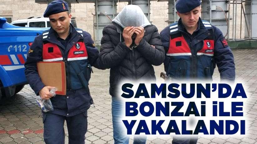 Samsun'da bonzai ile yakalandı