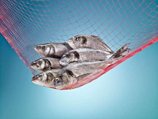 Polonyalıların sofralarına Türk balıkları lezzet katacak