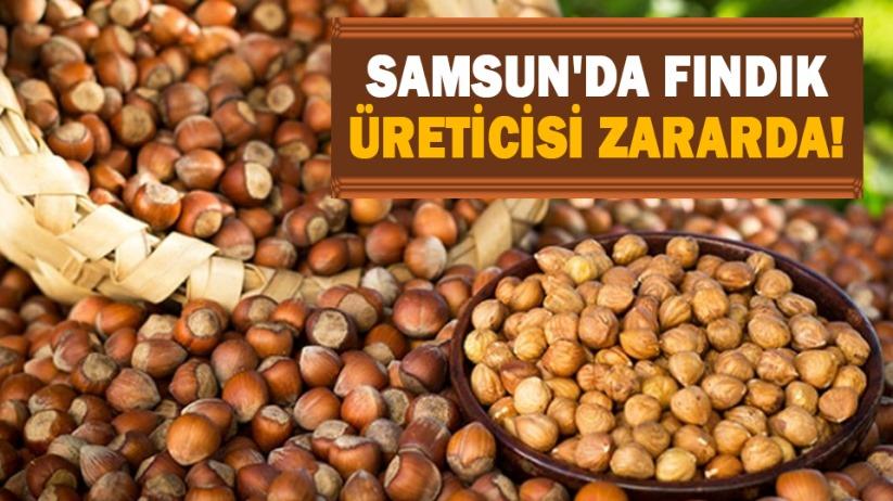 Samsunda fındık üreticisi zararda!