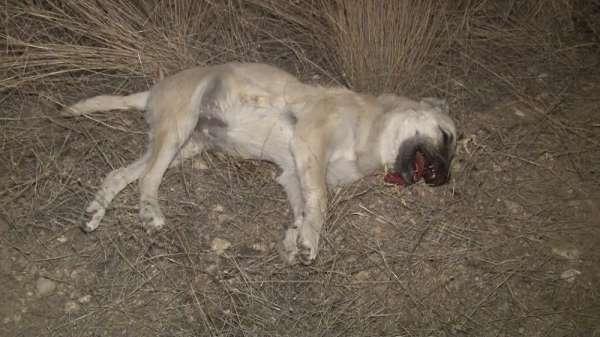 Başkentte 'iki köpek zehirli sosislerle öldürüldü' iddiası