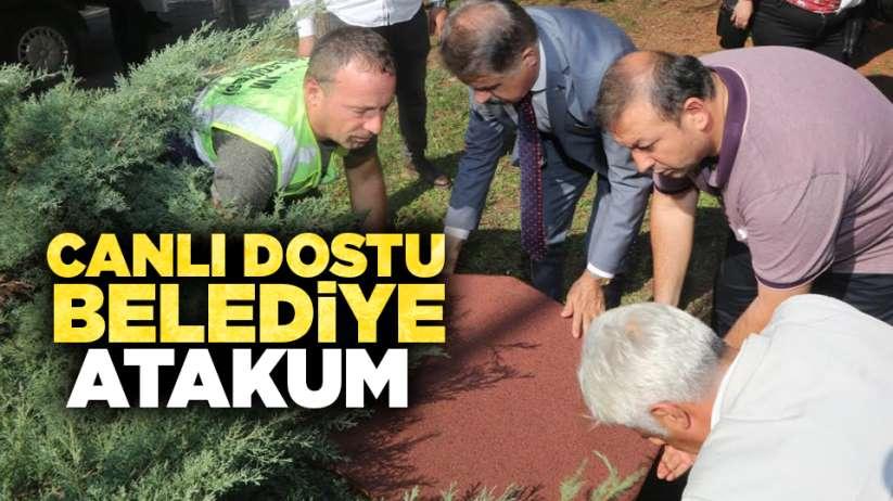 Canlı dostu belediye Atakum