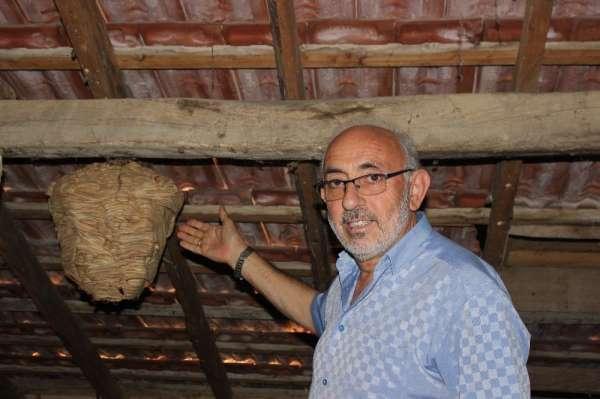 Sinop'ta yaban arılarının evin çatısında yaptığı yuva şaşırttı