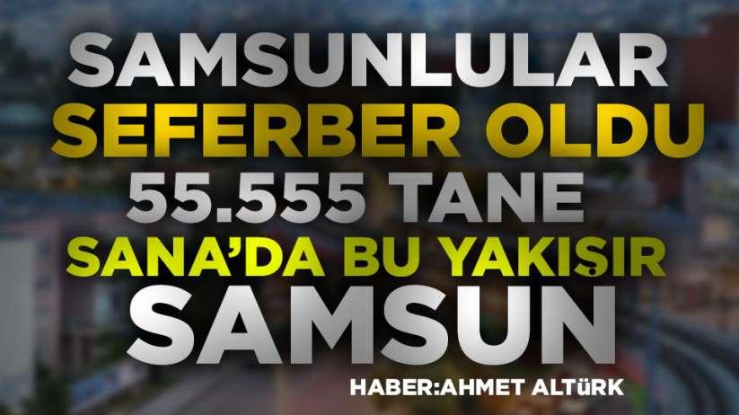 Samsun'da 55.555 adet fidan dikilecek