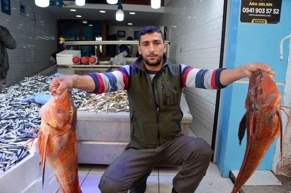 Sinop'ta 5 kiloluk kırlangıç balığı yakalandı