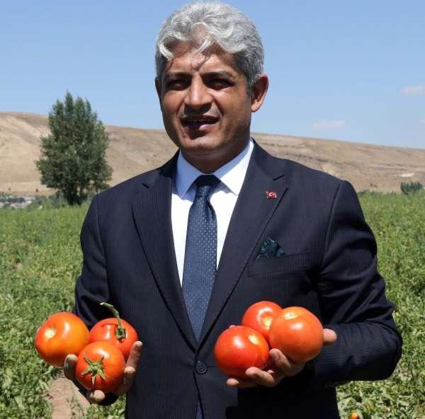 Bitlis domatesten yılda 200 milyon TL kazanıyor