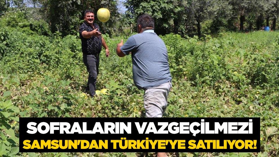 Sofraların vazgeçilmezi Samsun'dan Türkiye'ye satılıyor!