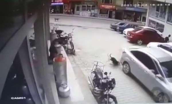 Köpeği ezdi, yoluna devam etti, o anlar kameraya yansıdı