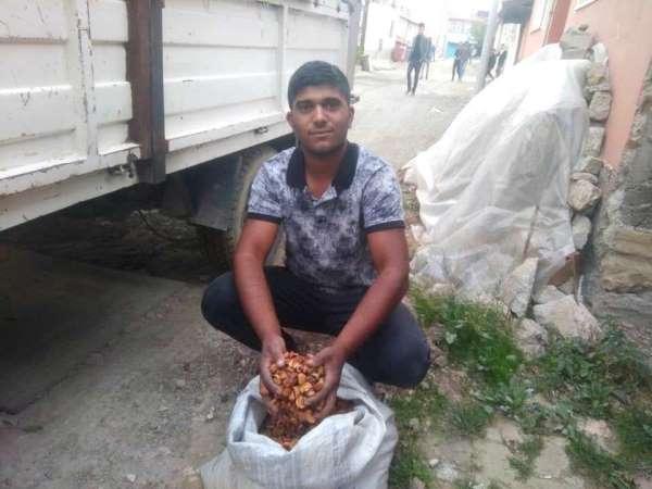 Elma kurusu fiyatları 4,5 TL'ye yükseldi