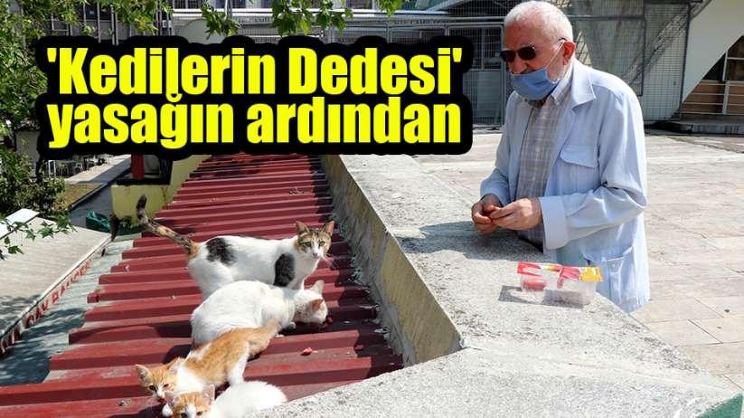 Samsun'da 'Kedilerin Dedesi' yasağın ardından hem kedilerine hem işine kavuştu