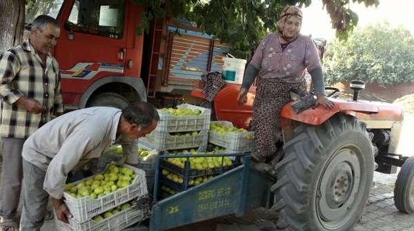 Ödemişli incir üreticileri sezondan umutlu