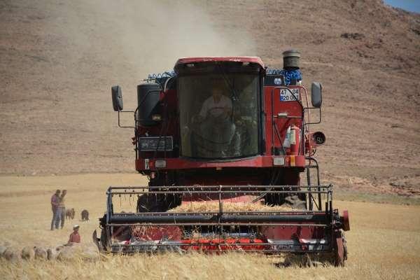 Mardinde kuraklık nedeniyle mercimek hasadına erken başlandı