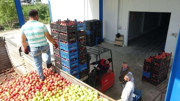 Bursada tonlarca meyve soğuk hava depolarında kaldı