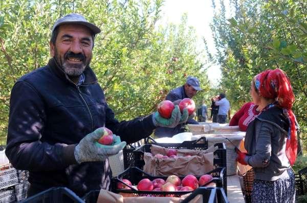 Van'ın lezzetli elmaları Kuzey Irak'a ihraç ediliyor