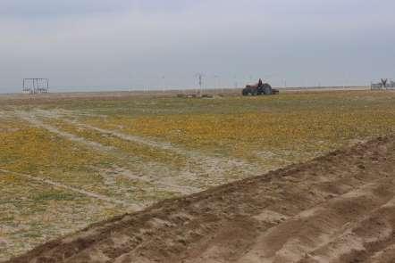 Burhaniye'de plajlar yaza hazırlanıyor
